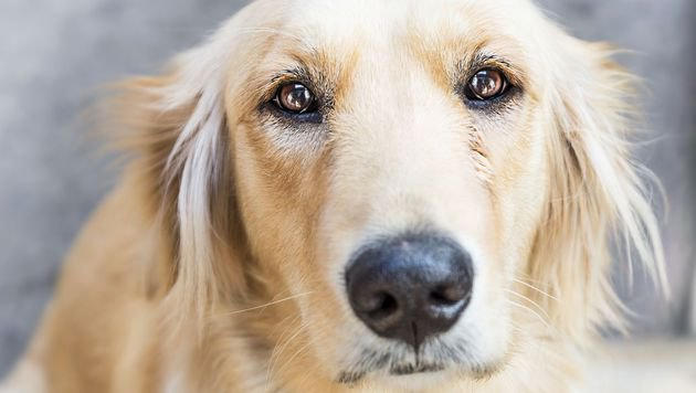 Hund beim Gassi Gehen misshandelt: Mann verurteilt (Bild: thinkstockphotos.de)