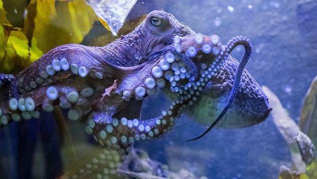 ... Flucht im Aquarium von Napier (Bild: National Aquarium of New Zealand