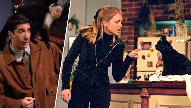 Die kultigsten Haustiere im Fernsehen (Bild: NBC, facebook.com/SabrinaTheTeenageWitchTV)