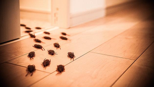 Kakerlaken als Haustiere im Hotelzimmer? (Bild: thinkstockphotos.de)