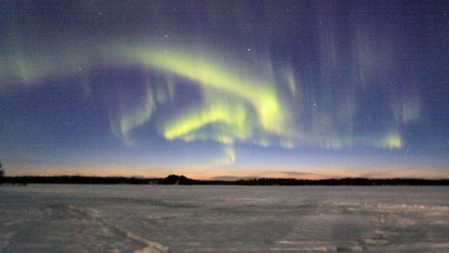 Hinter Huskys quer durchs wilde Lappland (Bild: Patricia König)