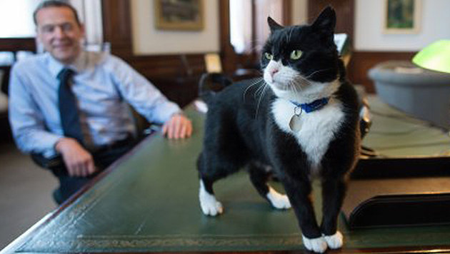 "London: Ministerium holt Kater als ""Chief Mouser"" (Bild: twitter.com/DiploMog)"