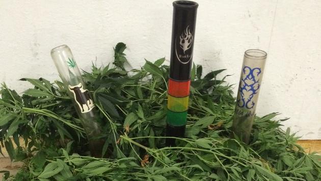 Hanfpflanzen und Drogenutensilien wurden sichergestellt. (Bild: Polizei)