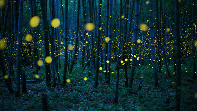 Enchanted Bamboo Lights (Bild: © Kei Nomiyana/Sony World Photography Awards)
