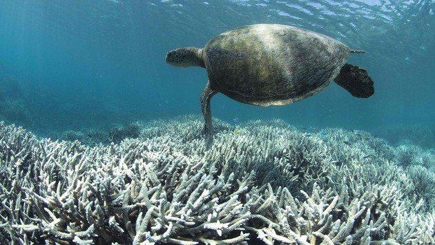 Statt Farbenvielfalt herrscht im Great Barrier Reef an vielen Stellen kahles Weiß. (Bild: APA/AFP/XL Catlin Seaview Survey/STR)