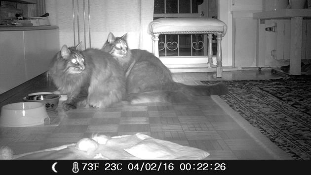 Wer kennt diese beiden haarigen Einbrecher? (Bild: zVg)