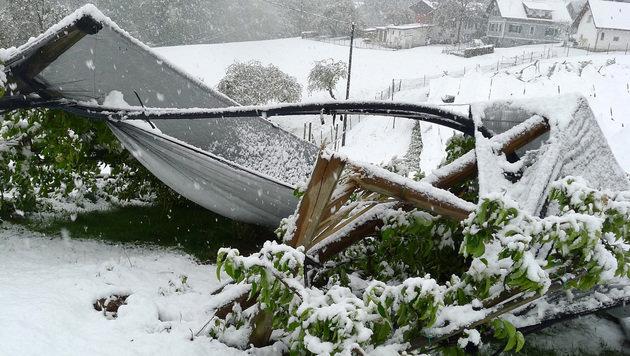 Viele Bäume gaben unter der Last des Schnees nach. (Bild: APA/LK STEIERMARK)