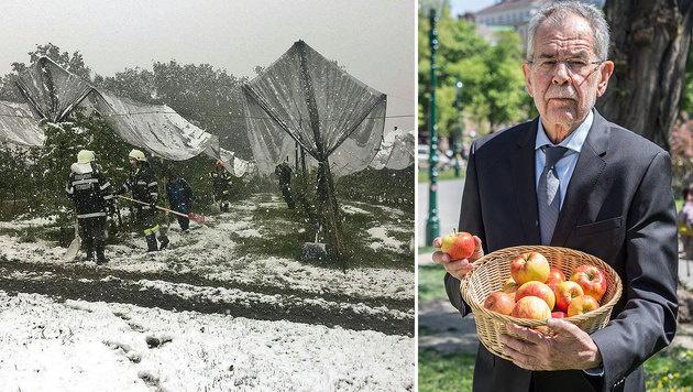 Die Schneefälle im April trafen die Obstbauern hart. Alexander Van der Bellen fordert rasche Hilfe. (Bild: APA/FEUERWEHR PETERSDORF II, Martin Radjaby)