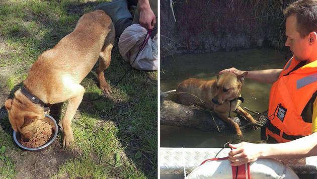 Tierhasser wollte Hund in March ertrinken lassen (Bild: Feuerwehr Angern an der March)