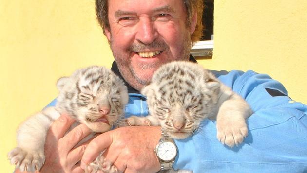 """NÖ: Weiße Tiger-Zwillinge in """"Weißem Zoo"""" geboren (Bild: APA/WHITE ZOO AUSTRIA/DORA Z?CHLING)"""
