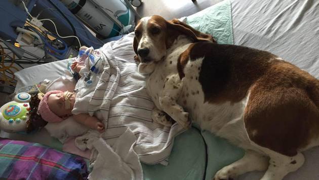 In Noras letzten Stunden wichen die Familienhunde nicht von der Seite des Babys. (Bild: facebook.com/Nora Hall, Miracle Baby)