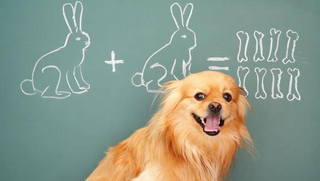 Pilotprojekt: Tiere helfen Kindern beim Lernen (Bild: thinkstockphotos.de (Symbolbild))
