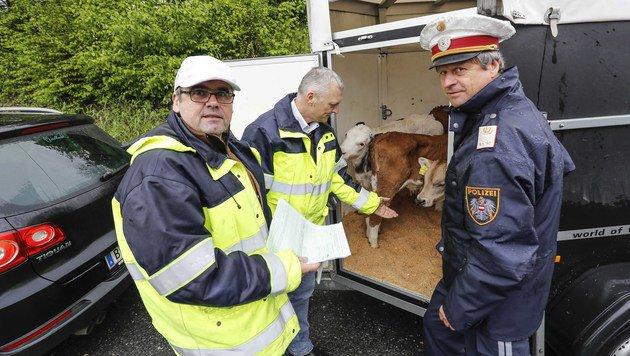 Tiertransport-Inspektor M. Pledl, Landesveterinärdirektor J. Schöchl und Postenkommandant H. Naderer (Bild: Markus Tschepp)