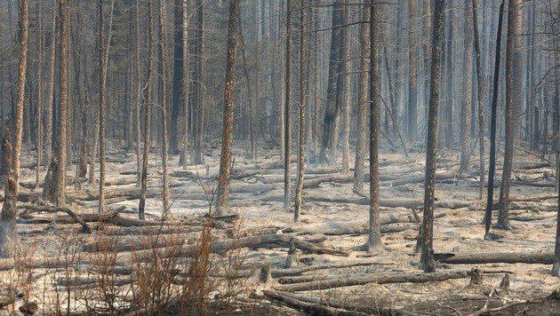Abgebranntes Waldstück (Bild: APA/AFP/COLE BURSTON)