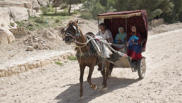 Die Lebensbedingungen der Pferde von Petra wurden endlich verbessert. (Bild: Vier Pfoten/Tibor Rauch)
