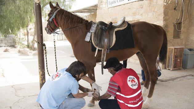 """""""Vier Pfoten""""-Experten kümmern sich um die Tiere. (Bild: Vier Pfoten/Tibor Rauch)"""