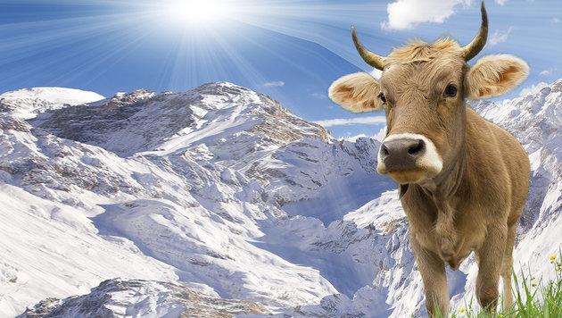 Volksabstimmung �ber Kuh- und Ziegenh�rner (Bild: thinkstockphotos.de)