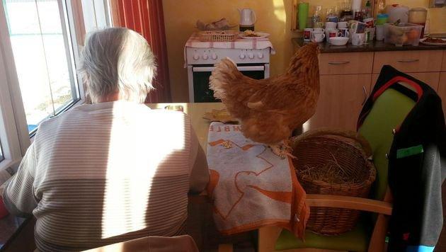 """Die Tiere """"arbeiten"""" sogar gemeinsam im Seniorenheim. (Bild: zVg)"""
