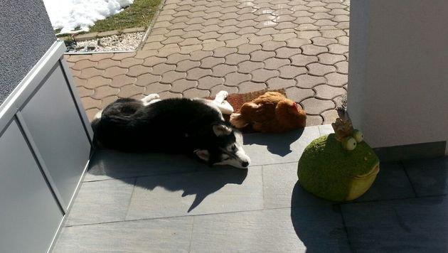 Hund und Henne sind beste Freunde - und Helfer! (Bild: zVg)