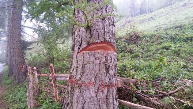 Große Sorge um kleine Wälder (Bild: Feuerwehr Reichenfels)