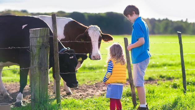 Urlaub am Bauernhof – so wird es so richtig schön! (Bild: thinkstockphotos.de)