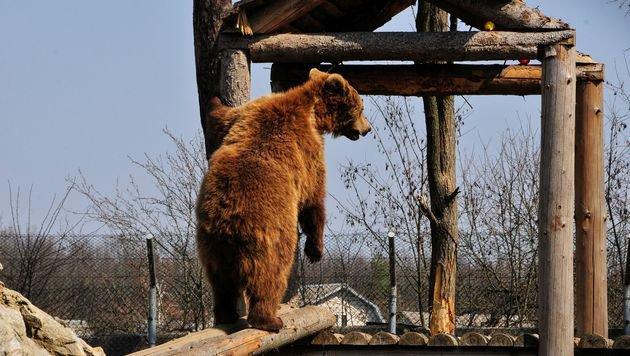Startschuss für Bärenschutzzentrum in der Ukraine (Bild: Vier Pfoten 2016)