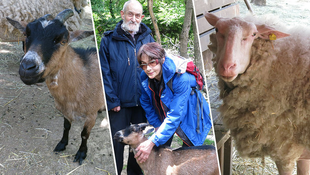 Davorin Svoboda und Elisabeth Wittig müssen ihre Tiere dringend neu unterbringen. (Bild: dez)