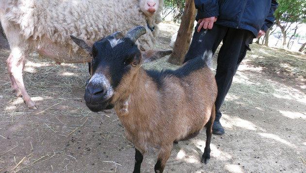 Gundi, 9 Jahre alt (Bild: dez)