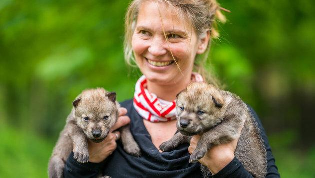 """""""Nachwuchs"""" für Wolfsforschungszentrum in NÖ (Bild: APA/Robert Bayer)"""