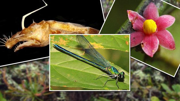 Forscher küren Top Ten der neuen Arten 2015 (Bild: IISE)