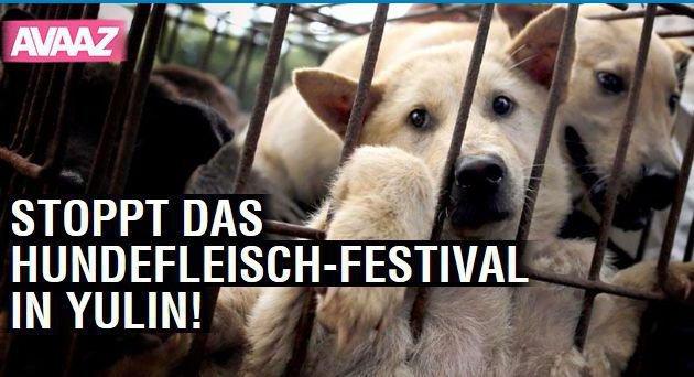 Screenshot einer Online-Petition gegen das Hundefleisch-Festival. (Bild: Screenshot https://secure.avaaz.org)