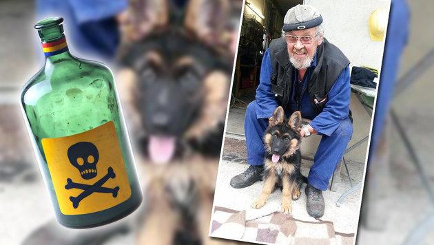 """""""Anschlag auf unseren Hund und unsere Familie"""" (Bild: zVg, thinkstockphotos.de)"""