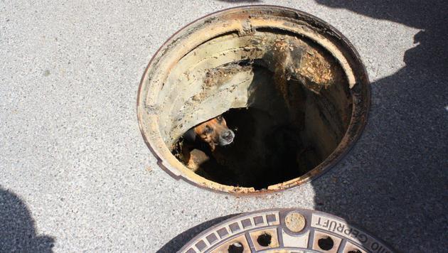 Mödling: Hund steckte in Kanalisation fest (Bild: APA/WWW.FFMOEDLING.AT)