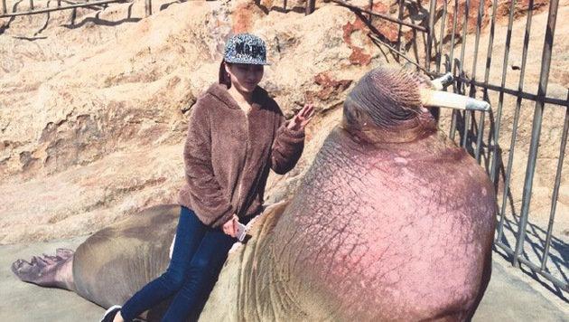 Selfie mit Walross endet für zwei Chinesen tödlich (Bild: Weibo.com)