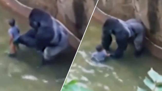 Bub in Gorilla-Gehege: Keine Strafe für Eltern (Bild: YouTube.com)