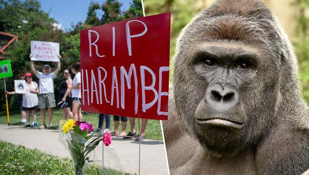 """Ruhe in Frieden, Harambe"": Trauer um den 17-jährigen Gorilla von Cincinnati (Bild: AP, APA/AFP/CINCINNATI ZOO & BOTANICAL)"