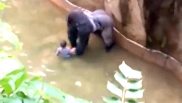 Bub in Gorilla-Gehege: Ermittlungen gegen Eltern (Bild: YouTube.com)