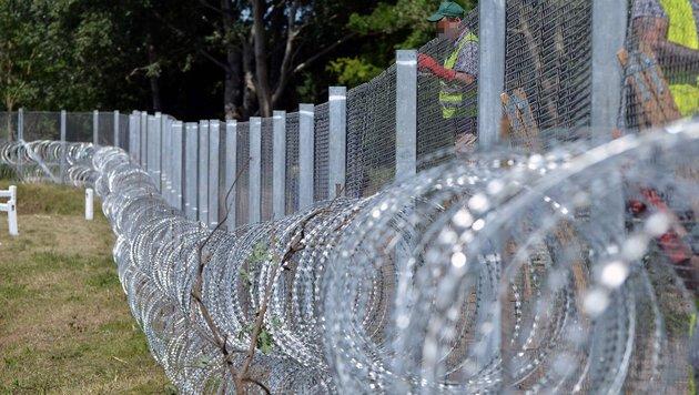 Der Grenzzaun zwischen Ungarn und Serbien (Bild: APA/AFP/Csaba Segesvari)