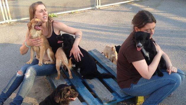 Dankbar schmiegen sich die geretteten Tiere an die Pflegerinnen. (Bild: Tierheim Dechanthof)
