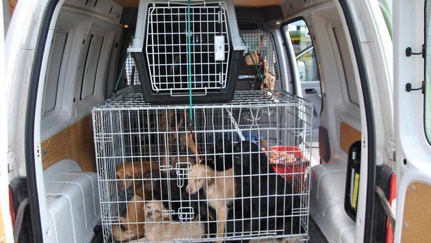 Alleine das Tierheim Dechanthof nahm 19 von 30 Nothunden auf. (Bild: Tierheim Dechanthof)