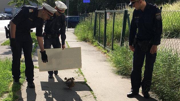Polizei eskortiert verirrte Entenfamilie in Park (Bild: LPD WIEN)
