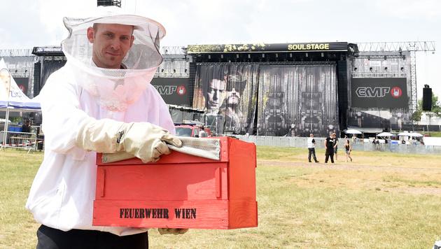 Rock in Vienna: Auch die Bienen wollten feiern (Bild: APA/HERBERT P. OCZERET)