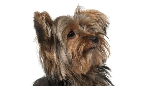 Hund riss bei Gewitter aus: Tierfreund als Retter! (Bild: thinkstockphotos.de)