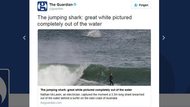 Australien: Hai springt neben Surfer aus Wasser (Bild: twitter.com)