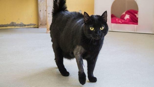 """Verletzte Katze """"Muki"""" nur durch Glück gerettet (Bild: WTV/Stefanie Hummer)"""