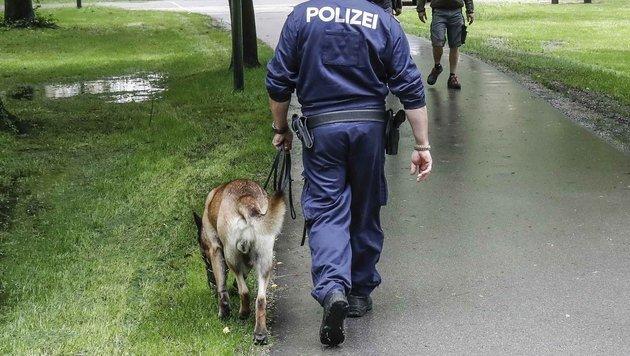 Diensthund tot: Polizist als Tierquäler (Bild: Markus Tschepp (Symbolbild))