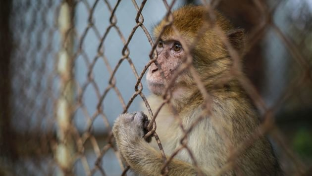 """Vier Pfoten"" aktiv im Khan Younis Zoo in Gaza (Bild: Vier Pfoten/2016)"