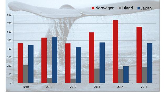 Norwegen ist weltweit Walfangnation Nummer eins. (Bild: NOAA)