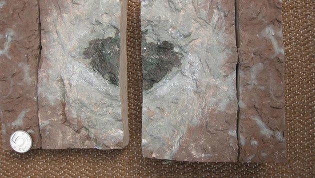 Rarer Meteorit in schwedischem Steinbruch entdeckt (Bild: Birger Schmitz)