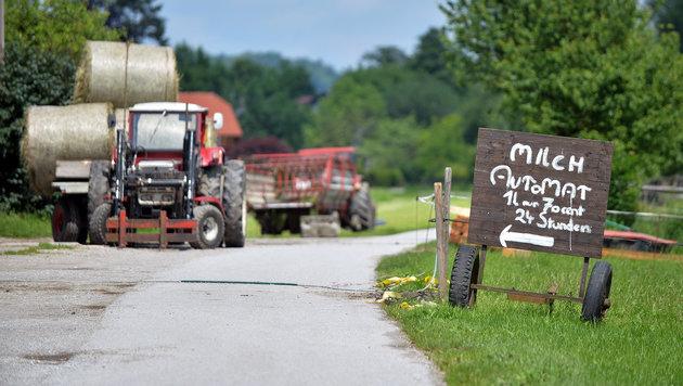 Milchpreise: EU will Bauern mit 500 Mio. € helfen (Bild: APA/BARBARA GINDL)